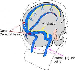 Beyin Sağlığı İçin Uykunun Önemi!