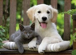 Kedi'mi Yoksa Köperk'mi Daha Akıllıdır?