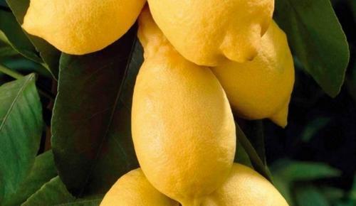 Limon İçmek İçin Bir Çok Sebep Var!