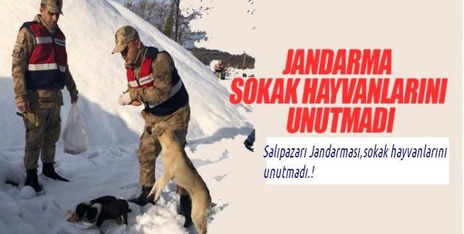 Jandarma'dan Örnek Davranış!