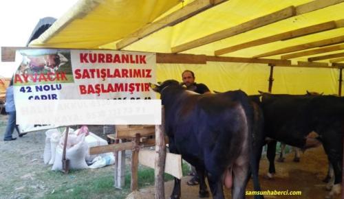 KURBANLIKLAR PAZARA İNİYOR!