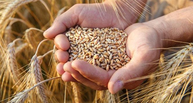 Gıda ve tarım ithalatında buğday, ihracatta fındık öne çıktı