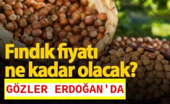 KORONA SALGINI FINDIK REKOLTESİNİ ARTIRDI