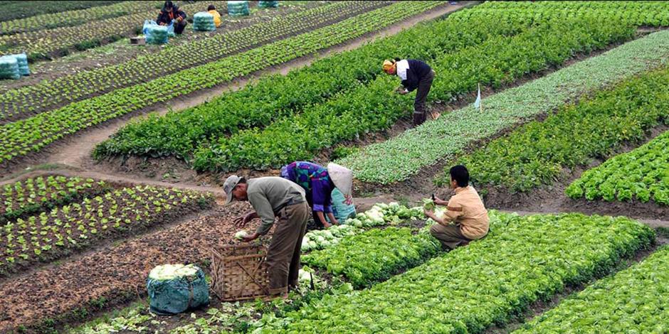 Öğrencilere,organik tarım öğretiliyor!